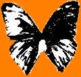 Fly to Black Butterfly Records Home Page