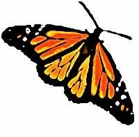 Click on Monarch Butterfly to visit Monarch Baby Publishing